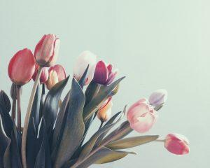 3 odmiany tulipanów, które z łatwością wyhodujesz w ogrodzie