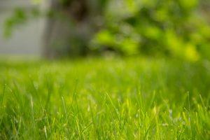 Jak dbać o piękny trawnik? Poznaj innowacyjne produkty marki Substral